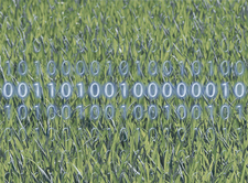 Grass with binary code