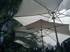 Umbrellas under trees in the sun