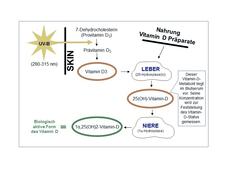 vitamin d durch fenster